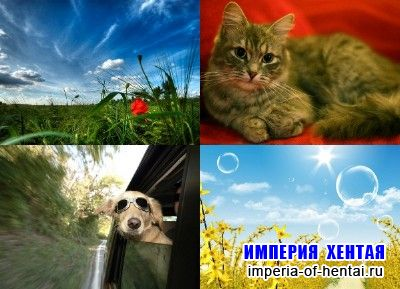 Kashebas wallpapers pack 26